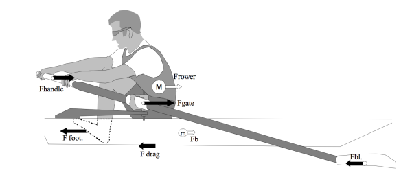Main forces on a rowing boat. Source V. Kleshnev, Boat acceleration, temporal structure of the stroke cycle, and effectiveness in rowing